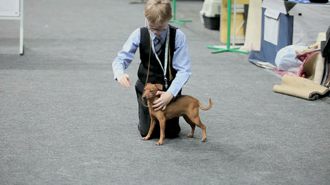 Dog trainer Stock Video Footage