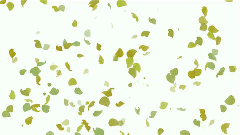 falling ginkgo and yellow leaves ,flower... Stock Video Footage