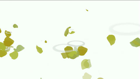 falling yellow leaves & ginkgos drops on water,reflects... Stock Video Footage