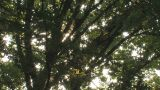 Summer Tree in Takanodai Park,Tokyo,Japan Footage