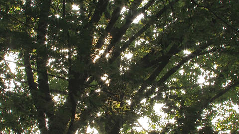 Summer Tree in Takanodai Park,Tokyo,Japan Stock Video Footage