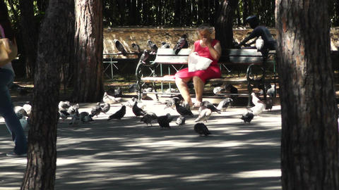 Old Poor Woman Sitting In A Bench And Fed Pigeons stock footage