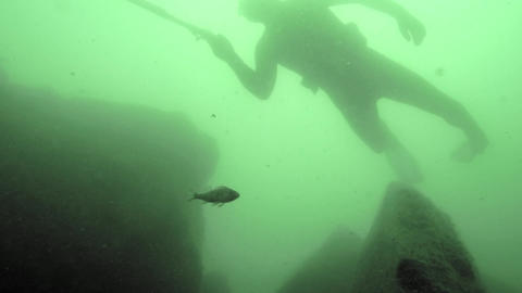 Spearfishing freediver with a speargun diving slowly past bottom rocks in deep w Footage