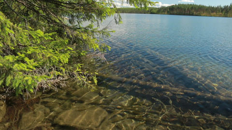 Clear-watered lake shore with spruce tree branches Footage
