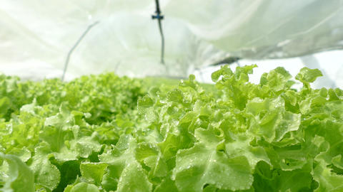 Fog Spray System In Hydroponics Gardens stock footage