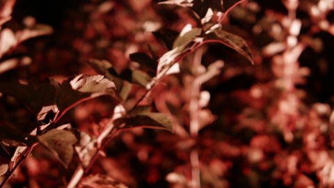 close up leaves illuminated color at night Footage