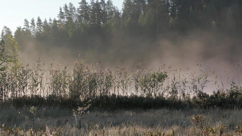 Fog moving behind reeds in soft morning light in Finland Footage