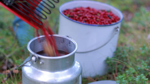 Berry picker pouring lingonberries into a metallic bucket Footage