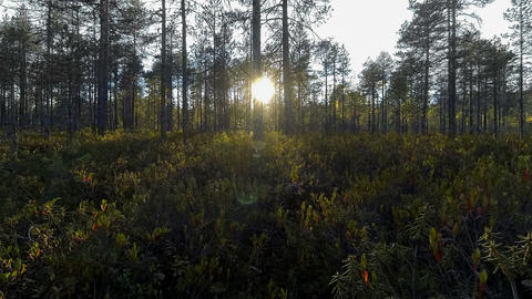 Timelapse of sun blinking behind trees at bog Footage