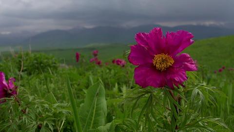 Flowers Spring Foothills HD Footage