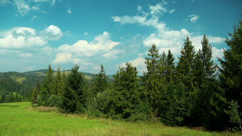 Time lapse of clouds and beautiful green coniferous trees Footage