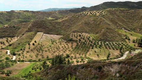 Olive plantations near Nea Skioni village on Kassandra peninsula, Greece Footage