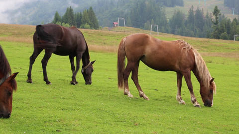 Beautiful horses on pasture Footage