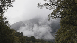 Timelapse of mist rising over a rainforest Live Action