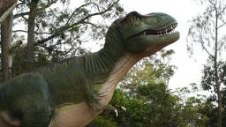 Tyrannosaurus rex zoom Footage