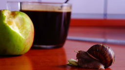 Snail, Apple, Coffee Cup stock footage