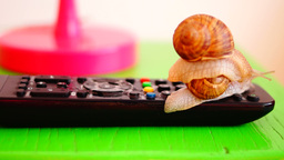 Snails on remote control, one traveling on the other shell Footage