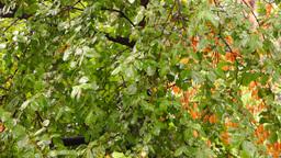 Early autumn rain with sound.September rain on my window Footage