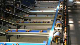 apple packing conveyor belt Footage