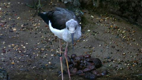 Bird Drinking Water stock footage
