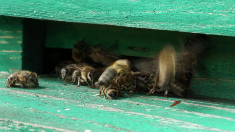 Unrestful bees in beehive Footage
