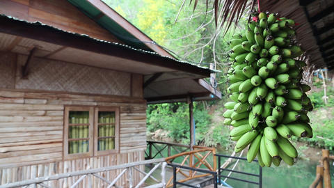 Bunch of green bananas and bungalow on the river Footage