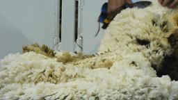blade shearing Footage