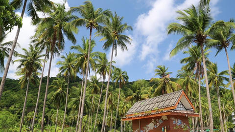 Little house amongst palms on the Koh-Chang island, Thailand Footage