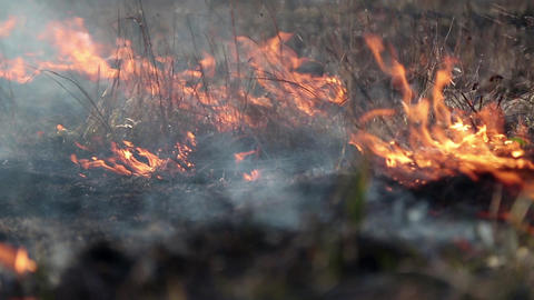 Burning dry grass on meadow Footage