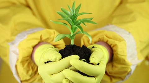 A human in yellow protective suit holding in hands soil and a green young plant Footage
