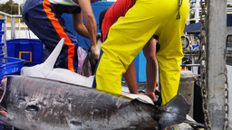 commercial fishermen Footage