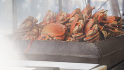Cooked Crabs stock footage