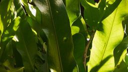 fern leaves closeup Footage