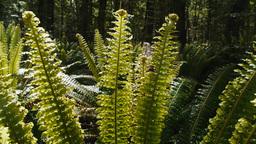 sunlit ferns Footage