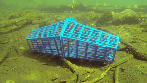 Crab trap on the bottom of a lake Footage