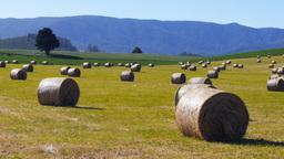 round hay bales Footage