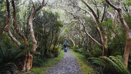 hiking the Milford Track Footage