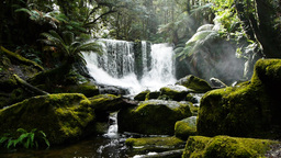 mossy waterfall Footage