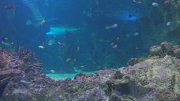 large public aquarium Footage