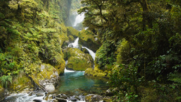 lush rainforest waterfall Footage
