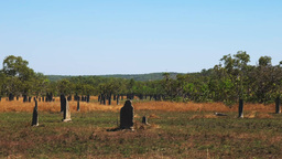 magnetic termite mounds Footage