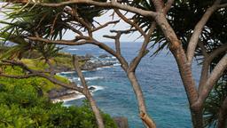 maui hana coastline and pandanus tree Footage