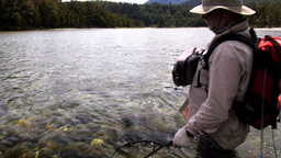 fisherman netting a brown trout Footage