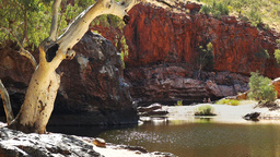 ormiston gorge and ghost gum Footage