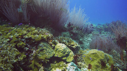 colourful coral reef in papua new guinea Footage