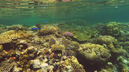 shallow coral reef at restorff island, png Footage
