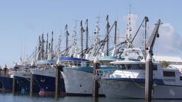 port lincoln fishing fleet Footage