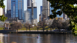 Rower On Yarra River stock footage