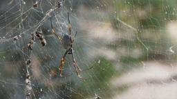 spider close up on web Footage