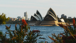 sydney opera house and bottlebrush Footage